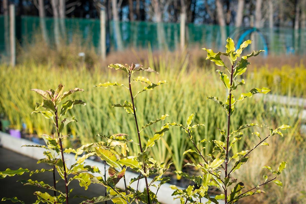 Wakatipu Reforestation Trust